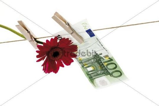 Blüte mit 100 Euroschein auf der Wäscheleine, Symbolbild Geldblüte, Falschgeld