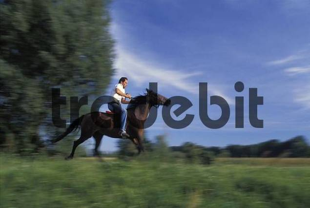 Rider on brown horse